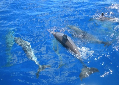 Grand Soleil 46 Dolphins